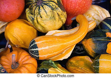 A background of colourful pumpkins, gourds and squashes