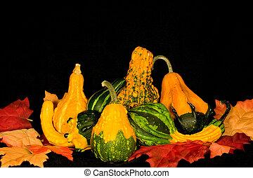 gourds, &, zöld, asztaldísz
