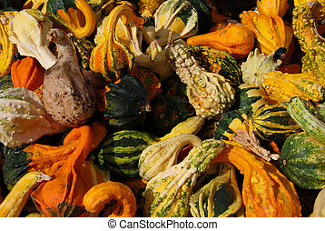 A harvest of autum gourds