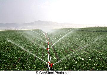 goutte, irrigation, systèmes, dans, une, champ agricole,...