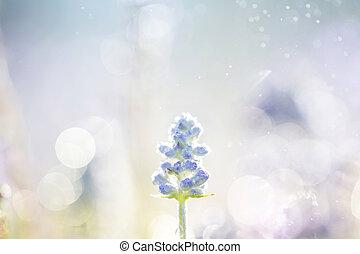 goutte pluie, bokeh, fleur, lavande, fond