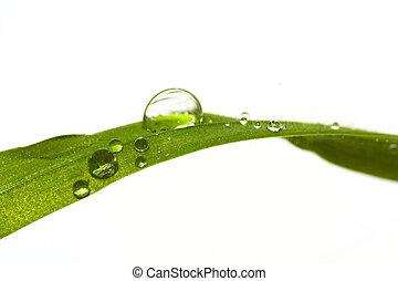 gouttelette eau, lame, herbe