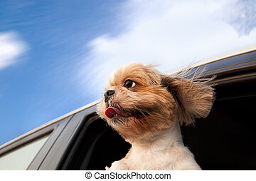 gozar, coche, perro, ventana, viaje, camino