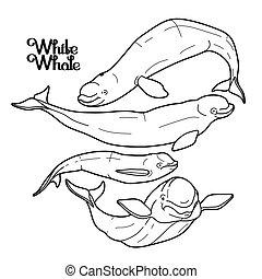 gráfico, ballena, colección, beluga