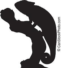 gráfico, contorno, camaleón, vector, elegante, perched, branch.