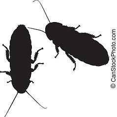 gráfico, contorno, cockroaches., dos, vector, sisear