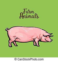 gráfico, mano., ilustración, cerdo, vector, style., dibujo