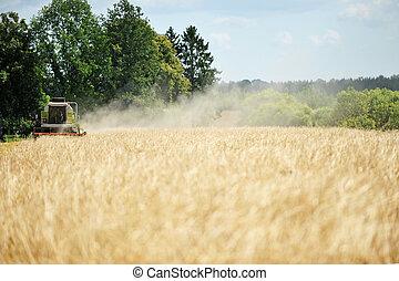 grão, colheita, ligado, campo