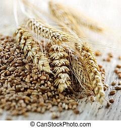 grão inteiro, trigo, sementes, closeup