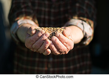 grão, mãos