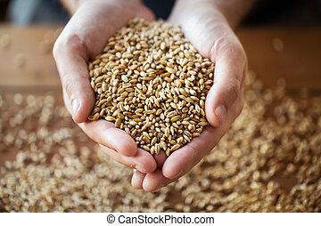 grãos cereal, agricultores, malte, segurar passa, macho, ou