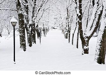 gränd, in, vinter, parkera