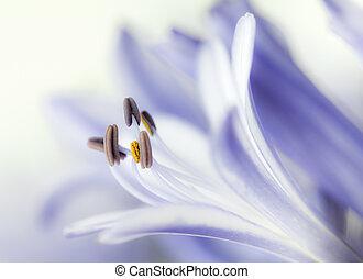 gräns, mauve, blomma, närbild