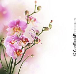 gräns, orkidé