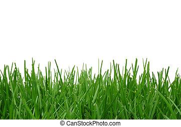 gräs, bakgrund