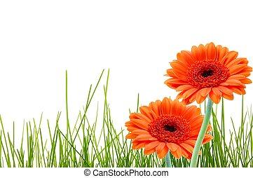 gräs, blomma, copyspace