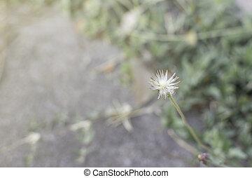 gräs, blomma, på, den, äng, hos, solljus, natur, bakgrund, fjäder