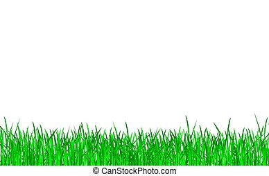 gräs, grön, isolerat