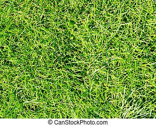 gräs, grön, struktur, bakgrund