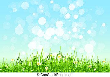 gräs, grön