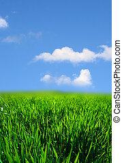 gräs, grönt landskap