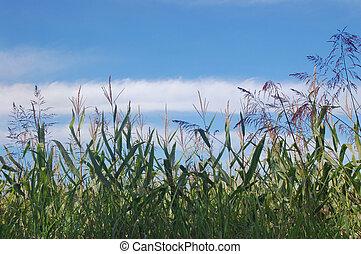 gräs, in, a, fält