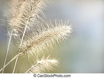 gräs, in, morgon, lätt