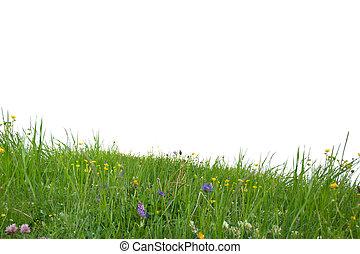 gräs, isolerat
