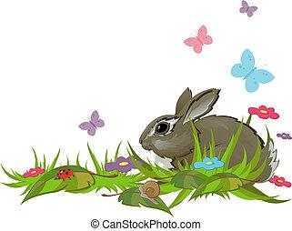 gräs, kanin