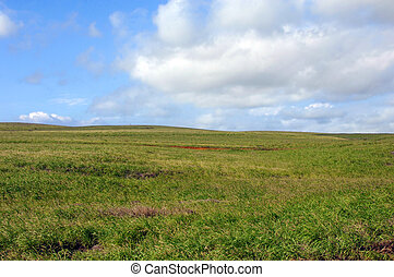 gräs, land, för, boskap
