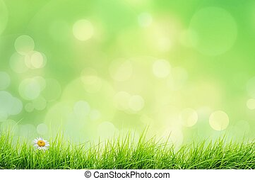 gräs, landskap, natur