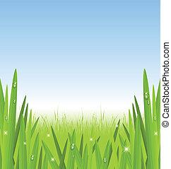 gräs, morgon