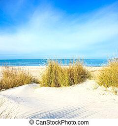 gräs, på, a, vita sandpappra, dyner, strand, ocean, och, sky