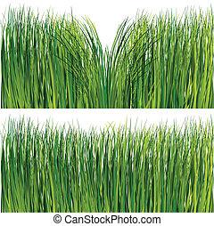 gräs, sätta