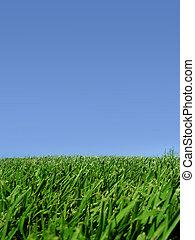 gräs, sky