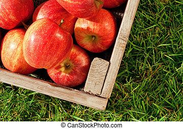 gräs, spjällåda, äpplen