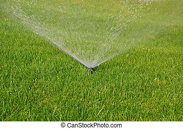 gräs, sprinkler
