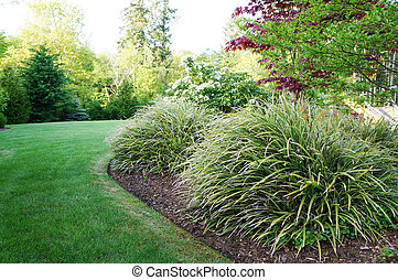 gräs, stort, grön, bakgård, bushes., landskap
