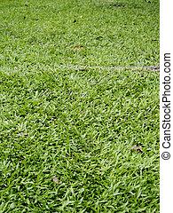 gräs, struktur, grön