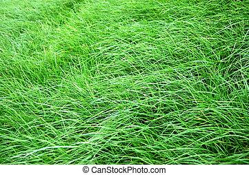 gräs, struktur