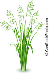 gräs, vektor, grön