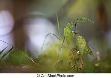 gräsbevuxen, spira, abstrakt, spindel, ung, lysande, anbud, nät, bakgrund., sol, concept., isolerat, belyst, fält, bokeh, skönhet, natur, solig, tema, närbild, vykort, bladen, träd, grönt gräs, eller