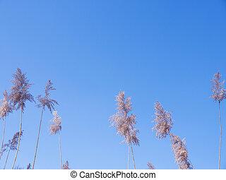 gräser, in, winter