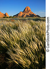 gräser, namibia, winkende