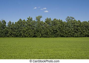 gräsfält, och, träd, landskap, utanför, staden