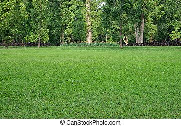 gräsfält, och, träd
