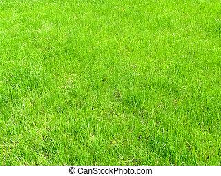 gräsfält