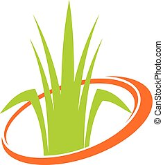 gräsmatta, service, slåttermaskin