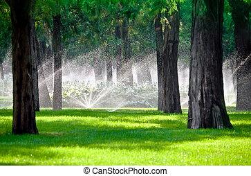 gräsmatta, träd, sprinkler