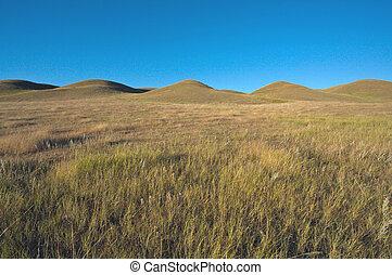 grässlätt, prärie, kullar